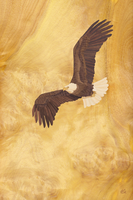 Eagle of Freedom - Marquetry by amazoncanvas