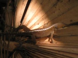 Lizard Touched by Sunlight by Mird-the-Clever