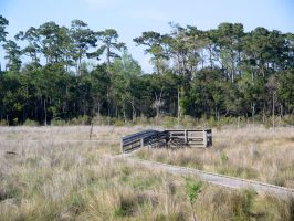 Fountainebleau State Park by tobilou