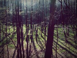 Shadows of trees. by B3VIN