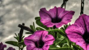 Surreal Flowers in the Sky by EagleNebulosity