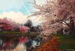 Spring in Boston I by MyLifeThroughTheLens