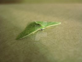 Green butterfly by geshorty34