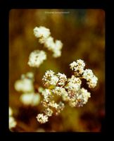 flowers 1 by Numicor