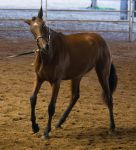 STOCK - 2014 Andalusian Nationals-21 by fillyrox