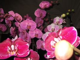 Orchids by eurybiades