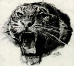 Pencil sketch of roaring tiger by chaseroflight