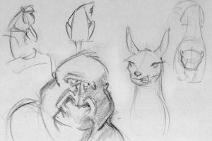 animal sketches by maguinness