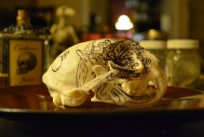 Bobcat Skull Right Side by ThePaintedCoyote