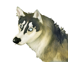 Larka the Husky by BearlyFeline