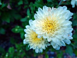 Mums by KKeiperPhotography