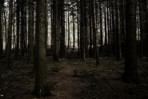 Forest IV by UlfStubbe
