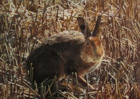 Hare Amongst Corn Stubbles by eastcorkpainter