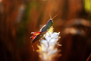 The Grasshopper by StuckRainbow
