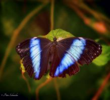 Blue electric. by Phototubby