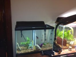 20 gallon High upgrade by KaulitzWolf