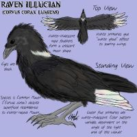 Raven Illucian reference sheet by illucian