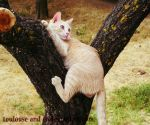 A cat in the tree by Toulouse-and-Co