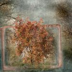 The Maple Tree by dubonnet