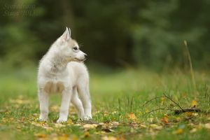 Young Lady by DeingeL-Dog-Stock