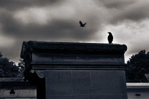 Ravens - Montmartre cemetery by Sublevel3