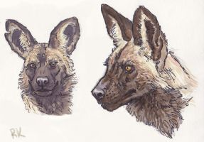 African Wild Dog Head Sketches by TruBlueArt