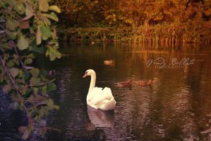The swan lake by Wendybell80