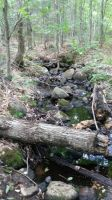 Creek in the woods. by preda