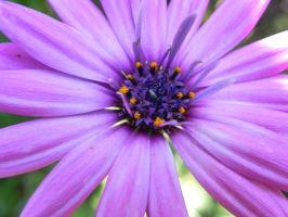 Purple Delight by Passion-For-Pictures