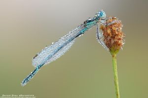 In droplets by patrykcyk
