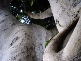 trees2 by drinkgreenwater