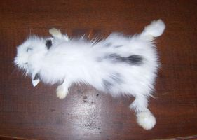 Black and white bunny pelt SOLD by DeerfishTaxidermy