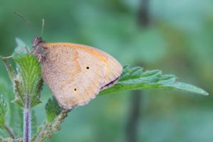 Butterfly resting by Weekendphotographer