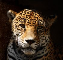 Jaguar 3 by krystledawn