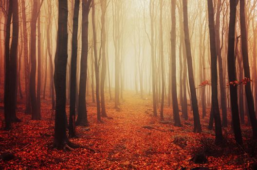 Autumn Walk LVIII. by realityDream