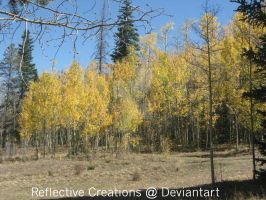 Fall Aspen Trees by ReflectiveCreations