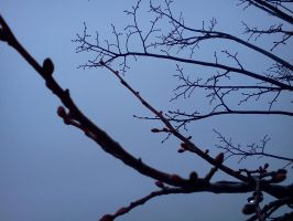 Cell Photo 05: Buds by LooseId