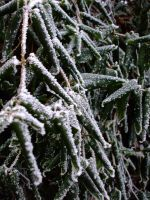 frozen leaves close up by KTVL-resources