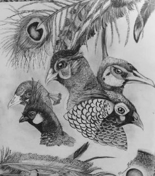 Pheasants and feathers by MariStar69