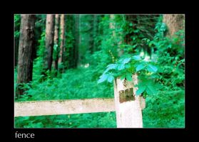 fence 2 by envyouraudience