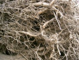 texture: root wad by cyborgsuzystock
