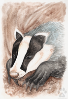 European Badger by Kitsune--Rin