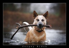 The Dog... by sergey1984