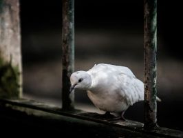 Through The Bars by InayatShah