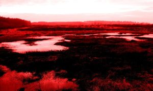 Blood Swamp by faithless12