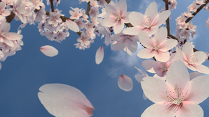 Cherry Blossoms by greenfyre95
