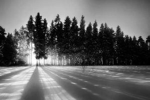 Lights BW by MikkoLagerstedt