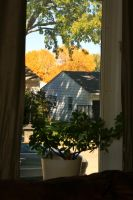 Fall Out My Window by olearysfunphotos