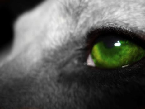 Green Eye by DarkSecretPlace