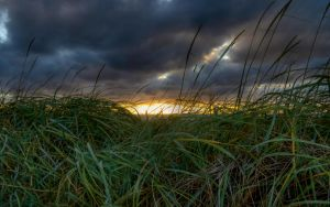 Grass and Sunset by Sleepwalker1803